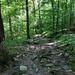 Shenepsit Trail 3