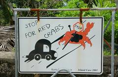 聖誕島在路旁所豎立的告示牌,提醒駕駛們小心陸蟹。(攝影:施習德)