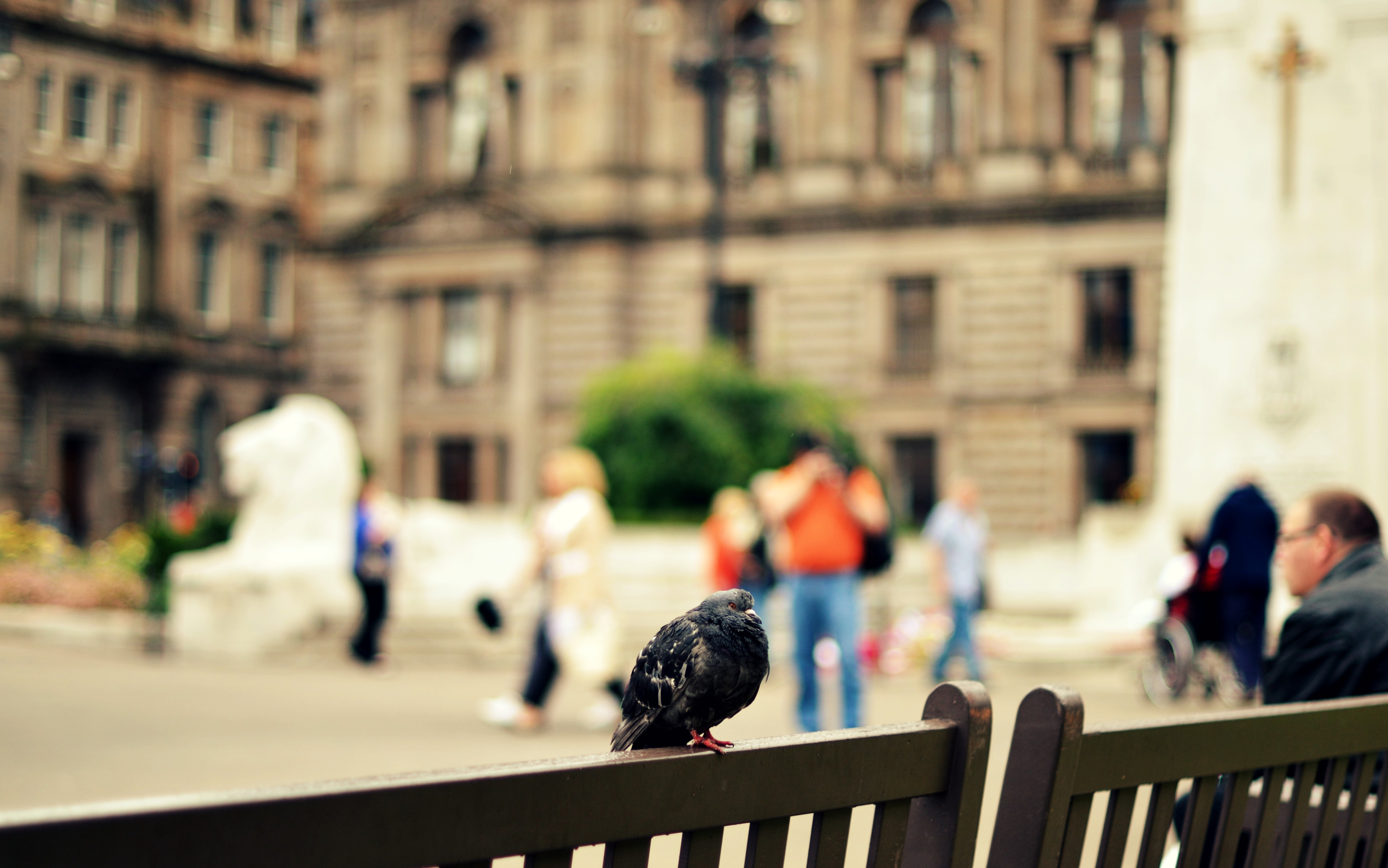 Pigeons at George Square, Glasgow.