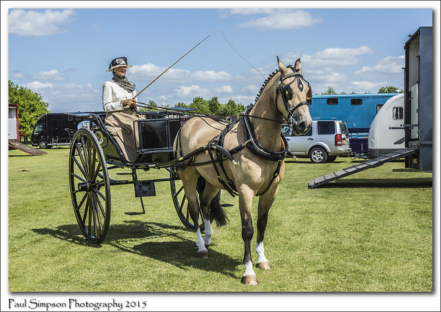 Horse and Carriage Lady