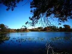 Mill Pond Park -- Autumn (10)