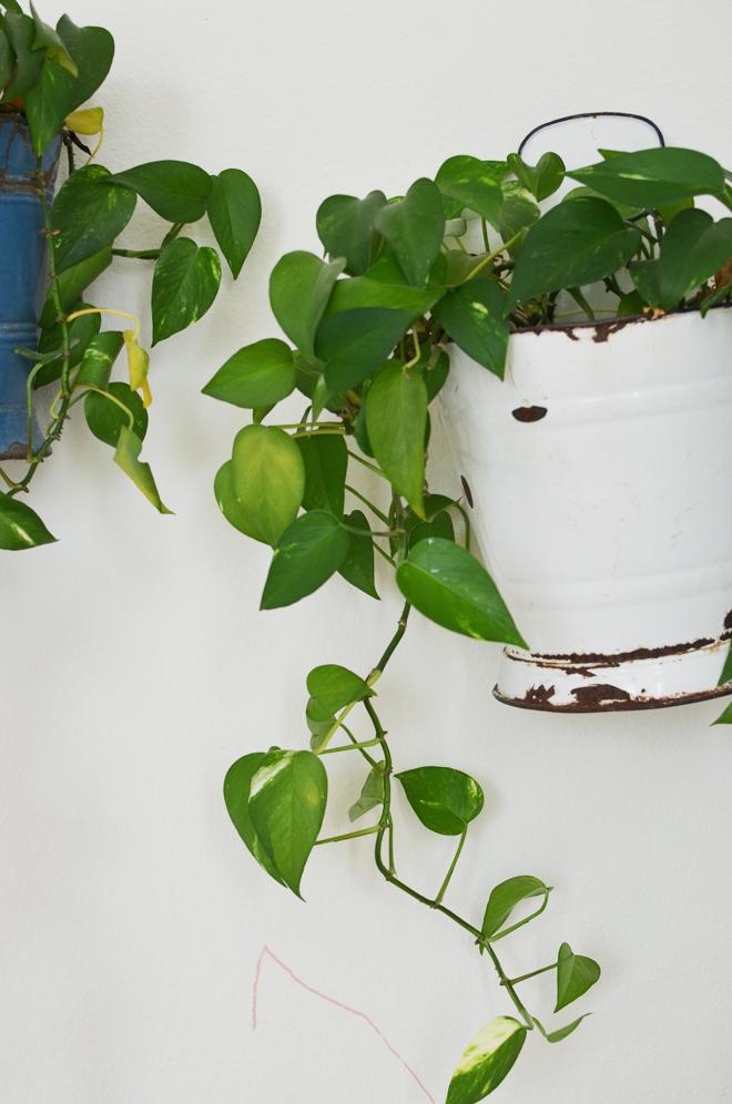 my plant babies