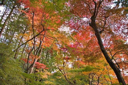 【写真】2012 紅葉 : 光明寺/2020-11-11/IMGP6523