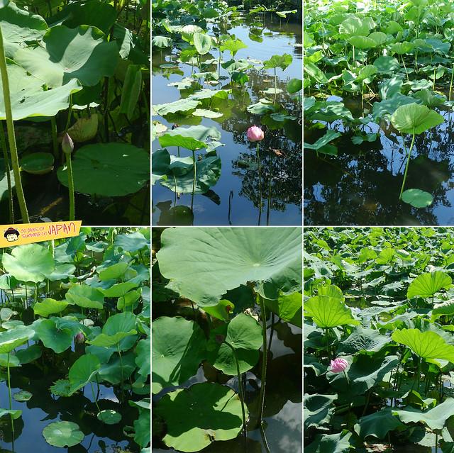 lily pond - ueno park 3