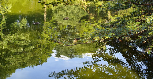 A mandarin duck and a pond by leicadaisuki