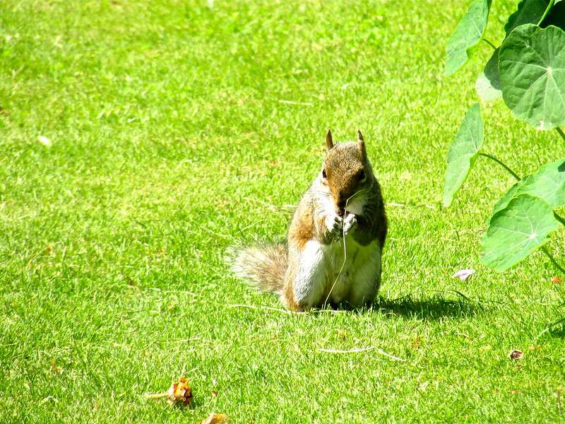 Squirrel in a summer garden by Regent_Photography