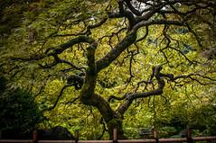 Portland Japanese Garden-21