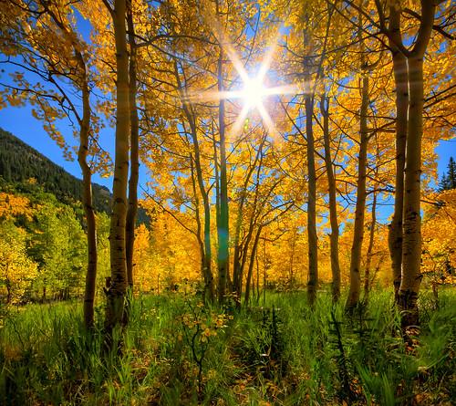 autumn sun colorado aspens stitched hdr guanellapass simga1020mm vertorama dphdr ptphoto lightroom4