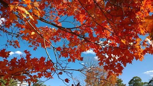 blue trees winter sunset red sky orange brown newyork fall nature nokia seasons longisland imran anwar windowsphone imrananwar lumia1020