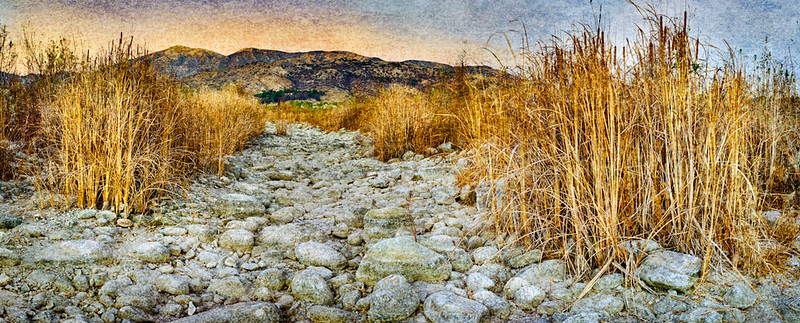 Dry Creekbed and Cat Tails • Fillmore, CA 2013