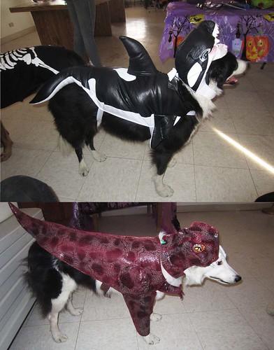 dogscostumes2013