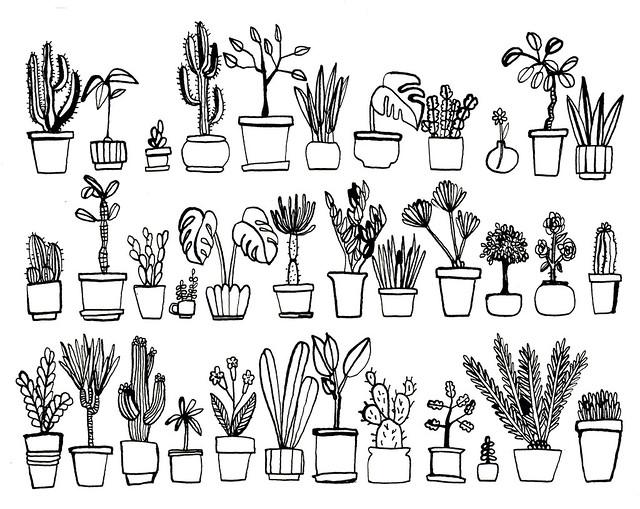 krukväxter