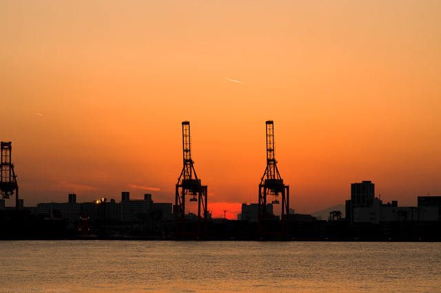 two long necks with sunset