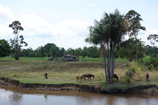 Cavalos e casa na Amazónia