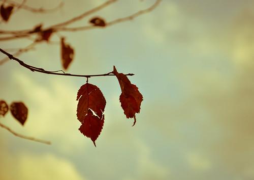 枯葉よ~♪