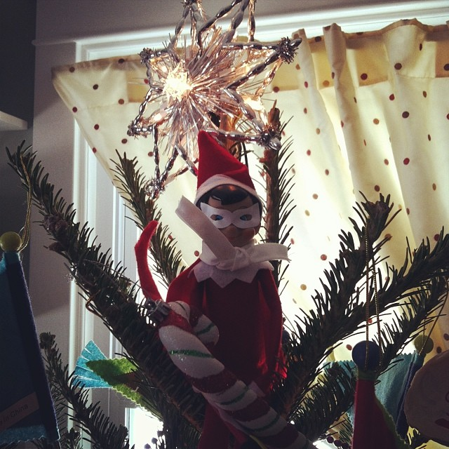 #elftakeover : Buddy hanging out in the Christmas tree