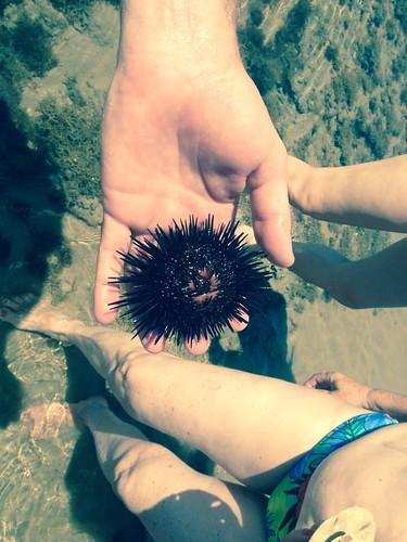 Natureza Praia Sonho Verde - Maceió