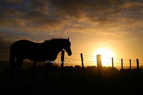 sunset horse animal rural fence farm farming foxglacier southisland westcoast westland equine southwestland rinathompson