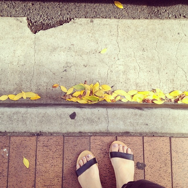 Finding beauty in the everyday. #noticing #beautyallaround #leaves #lookingdown