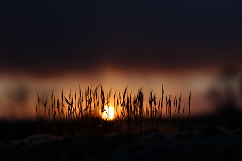 winter light sun macro sunrise dawn moss silhouettes daybreak eos600d