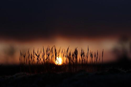 winter light sun macro sunrise dawn moss silhouettes daybreak eos600d