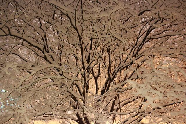 Crepe Myrtle Snow