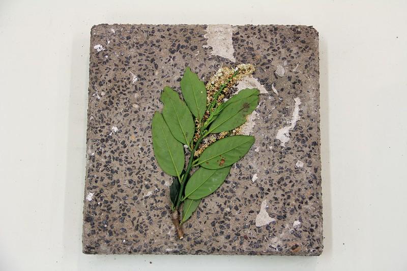 Herbarium #1_11