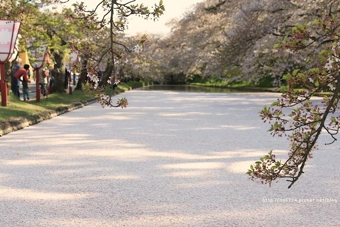 20140502_AomoriSakura_2172 f