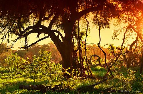 africa park camera camping trees light sunset orange sunlight tree nature sunshine digital forest landscape southafrica golden bush nikon martin african boom unesco adventure safari national photograph rivers zimbabwe afrika botswana dslr za worldheritage limpopo lateafternoon southernafrica bushveld africansunshine mapungubwe heigan shashe d7000 01january2014 linpopo mph9785