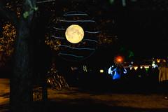 Greenlake Luminata lantern Parade 2016 (265)