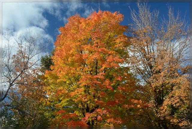 *** Fall Foliage Fiesta - I. ***