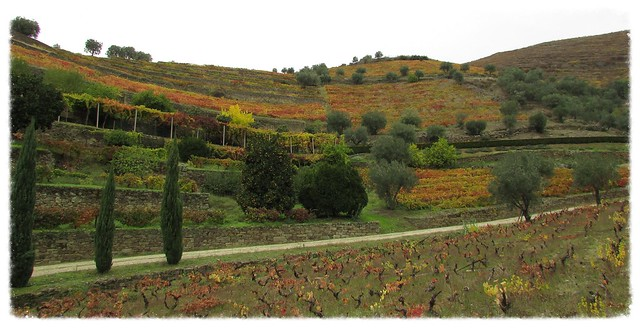 Douro vineyards with late, Canon POWERSHOT SX400 IS