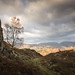 Holme Fell (Lake District) 06/11/2016 by Matthew Dartford