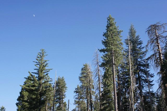 Moon_Trees