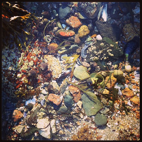 #tidepool #nature #maine