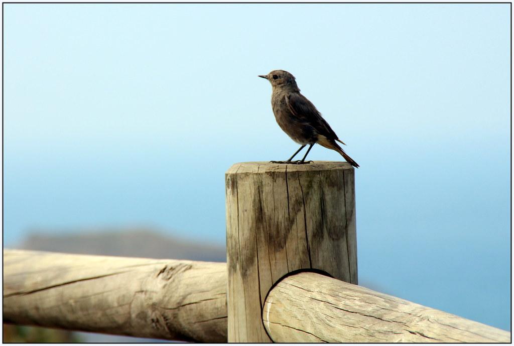 Un pájaro tranquilo