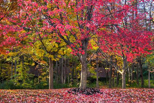 Fall Impression - Symphony of Colors