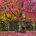 Fall Impression - Symphony of Colors by Simon__X