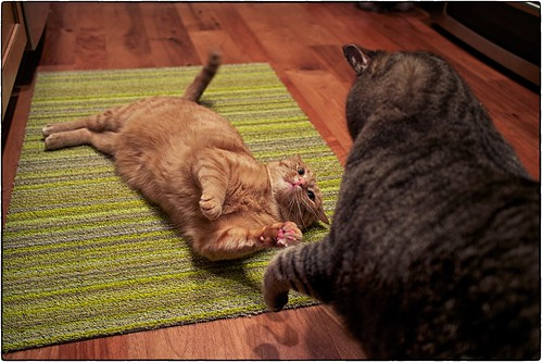 Cat Fight, November 03, 2013