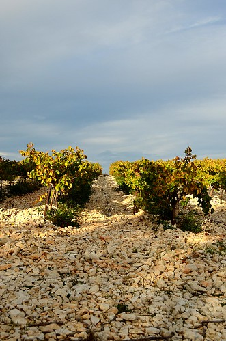 Vineyards of Lirac