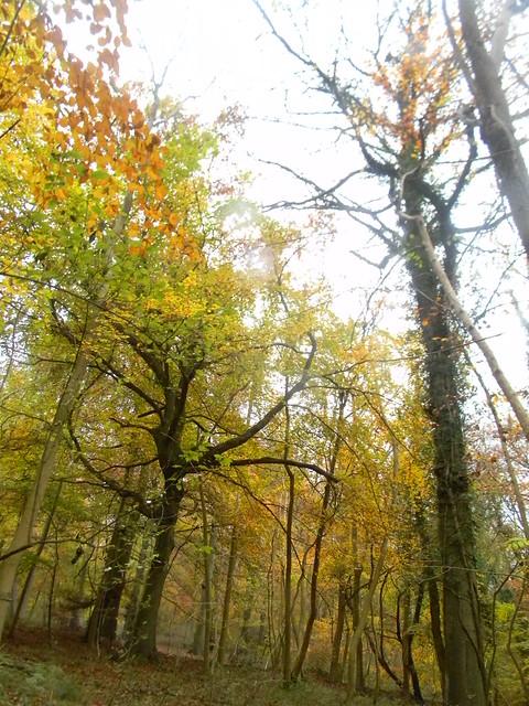 Autumn colour 7