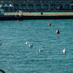 Sulle rive a Trieste
