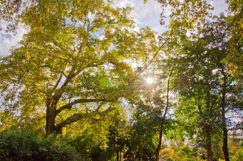 L'automne au parc Monceau