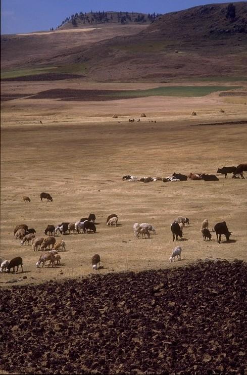 Ethiopian rangeland