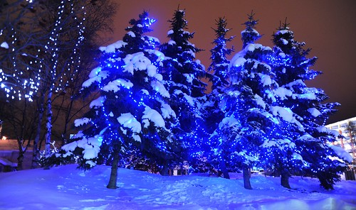 Blue Christmas spruce and birch tree light display, downtown in the snow, Anchorage, Alaska, USA by Wonderlane