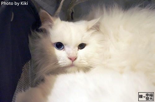 cat_5th (46)