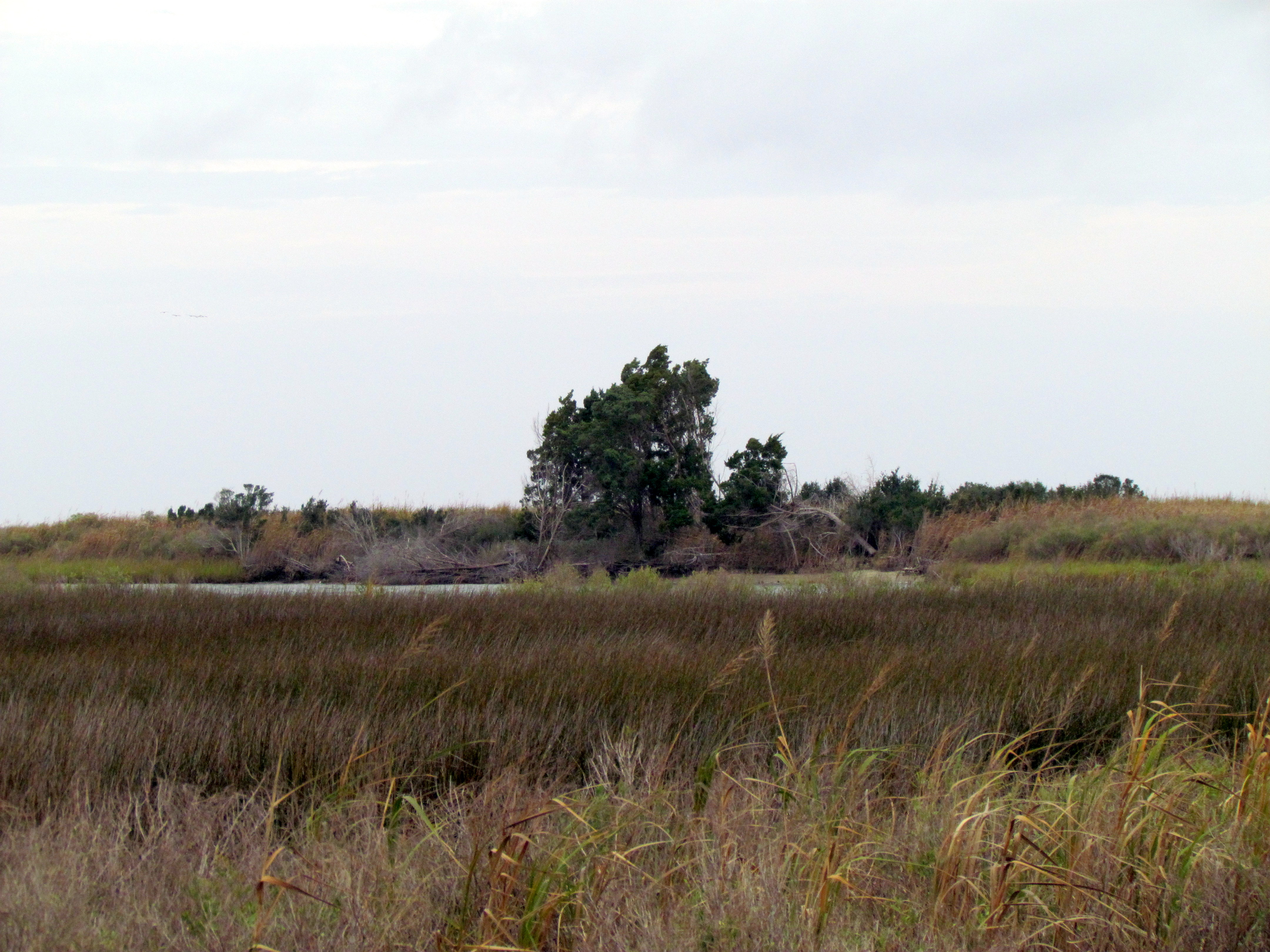 cedar island A bounty of birds cedar island is home to many different birds such as the black  rail come explore what kinds of birds you can see on your visit learn more.