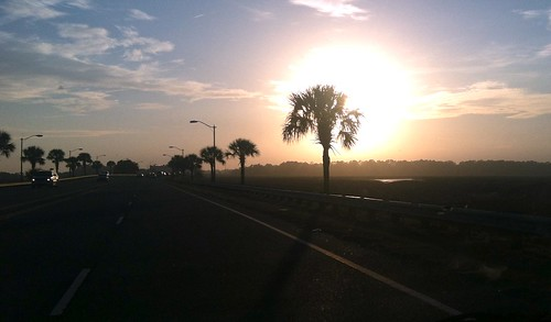sunset silhouette sunrise silhouettes sunsets palmtrees palmtree adamhall palmetto trackhead trackheadstudios trackheadxxx