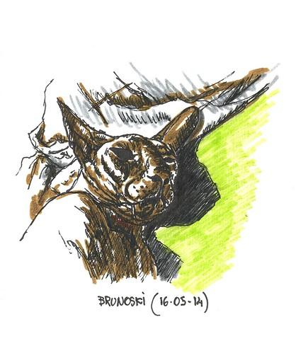 Brunoski