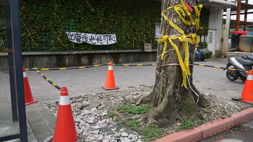 目前光復南路行道樹已遭斷根,並以石塊重壓以免傾倒